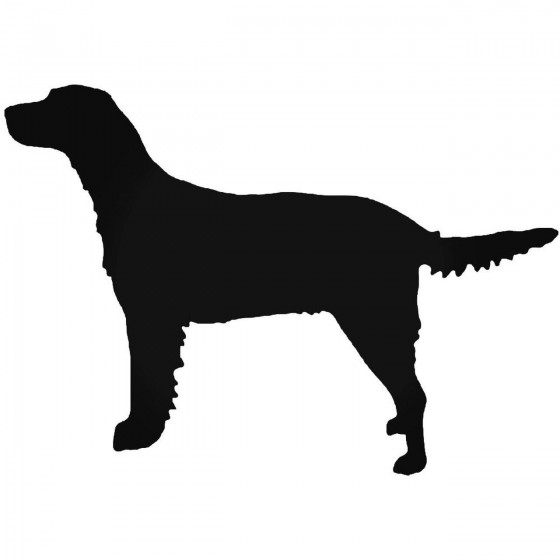 Large Munsterlander Dog...