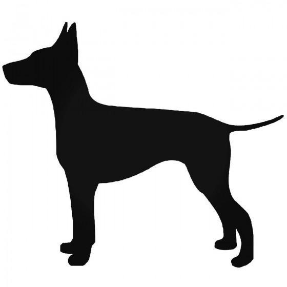 Manchester Terrier Dog...