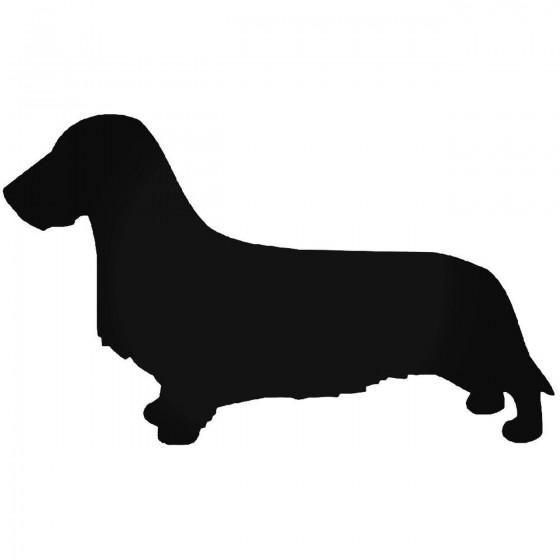 Wirehaired Dachsund Dog 3...