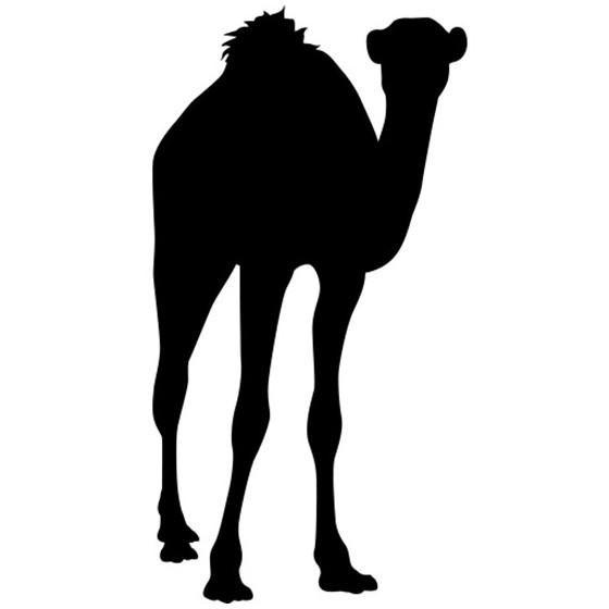 Camel Vinyl Decal Sticker V21