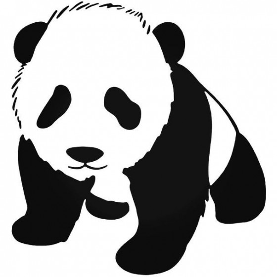 Baby Panda Wildlfie