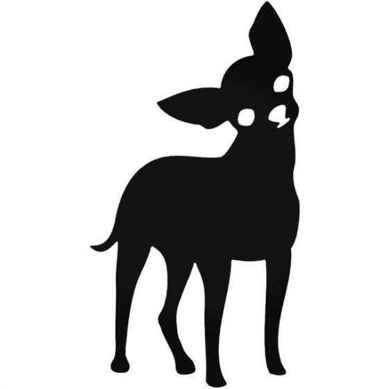 Chihuahua Curious Dog