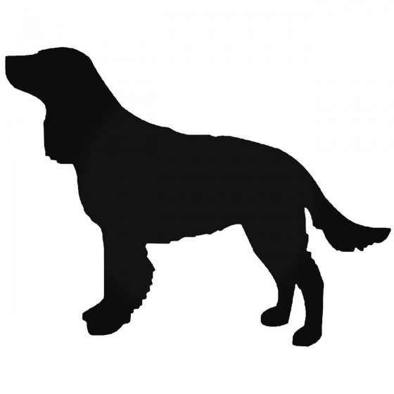 American Water Spaniel Dog...