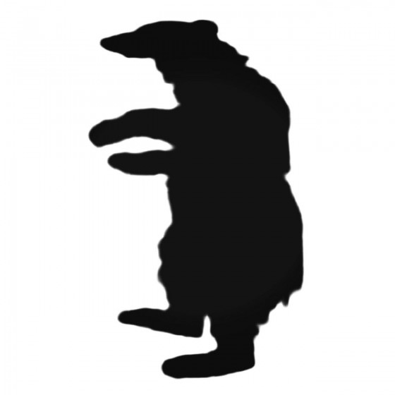 Bear Standing On Two Legs...