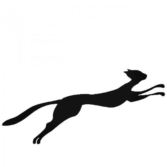 Cat Running And Jumping...