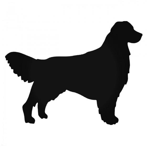 Golden Retriestyle Dog...