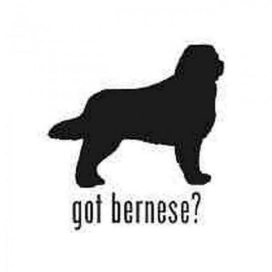 Got Bernese Mountain Dog...