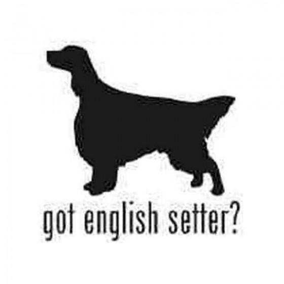 Got English Setter Dog...