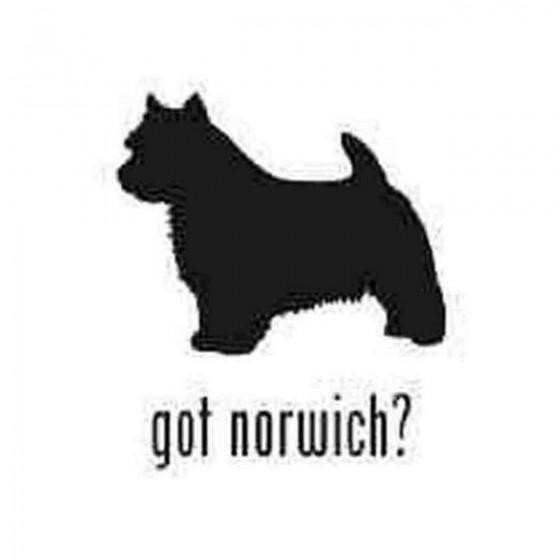 Got Norwich Terrier Dog...